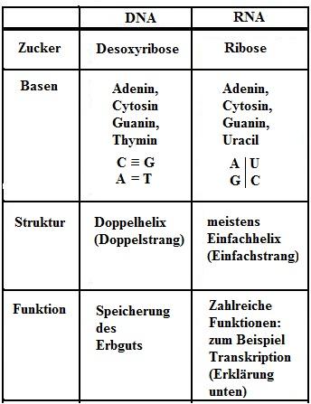 DNA / RNA Unterschied Vergleich