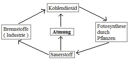 Kohlenstoffkreislauf / Sauerstoffkreislauf