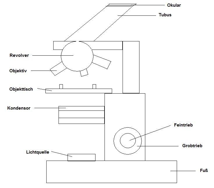 das lichtmikroskop. Black Bedroom Furniture Sets. Home Design Ideas